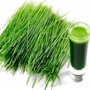 products-wheat-grass